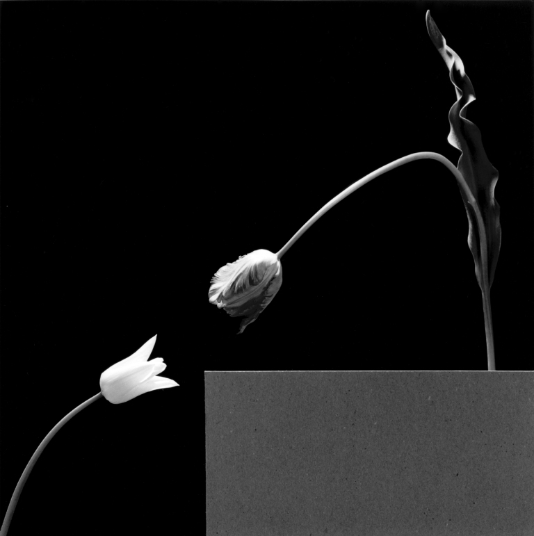 206-Due-tulipani-1984