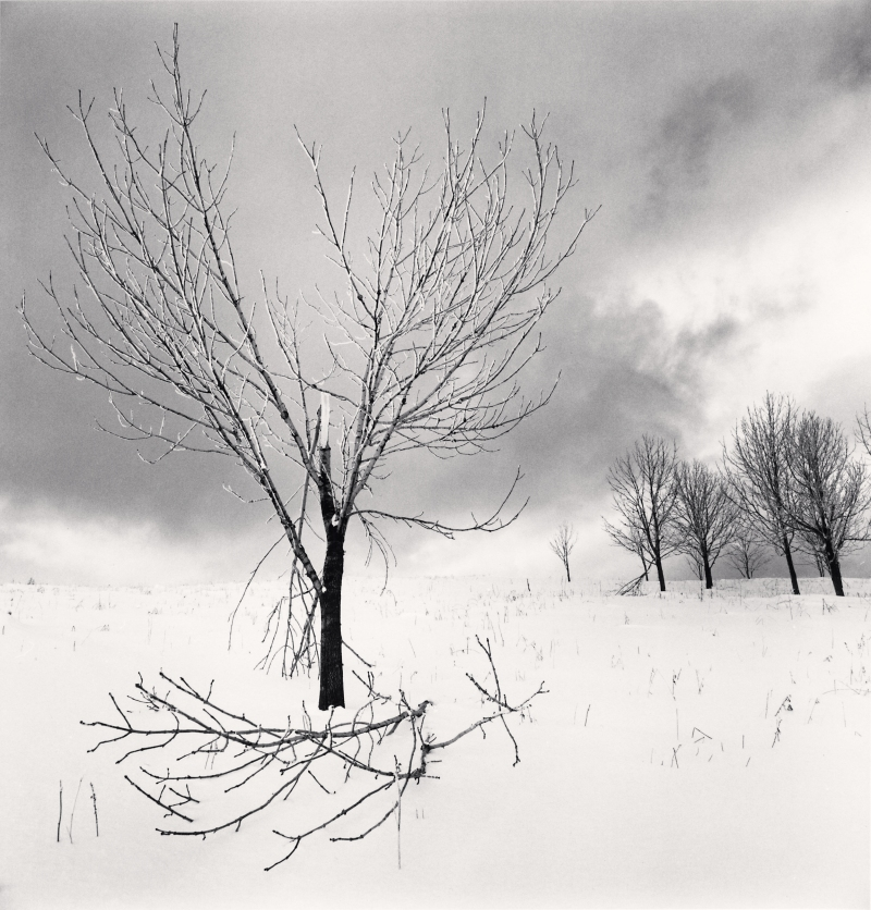 Broken Branch, Yangcao Hill, Heilongjiang, China. 2011