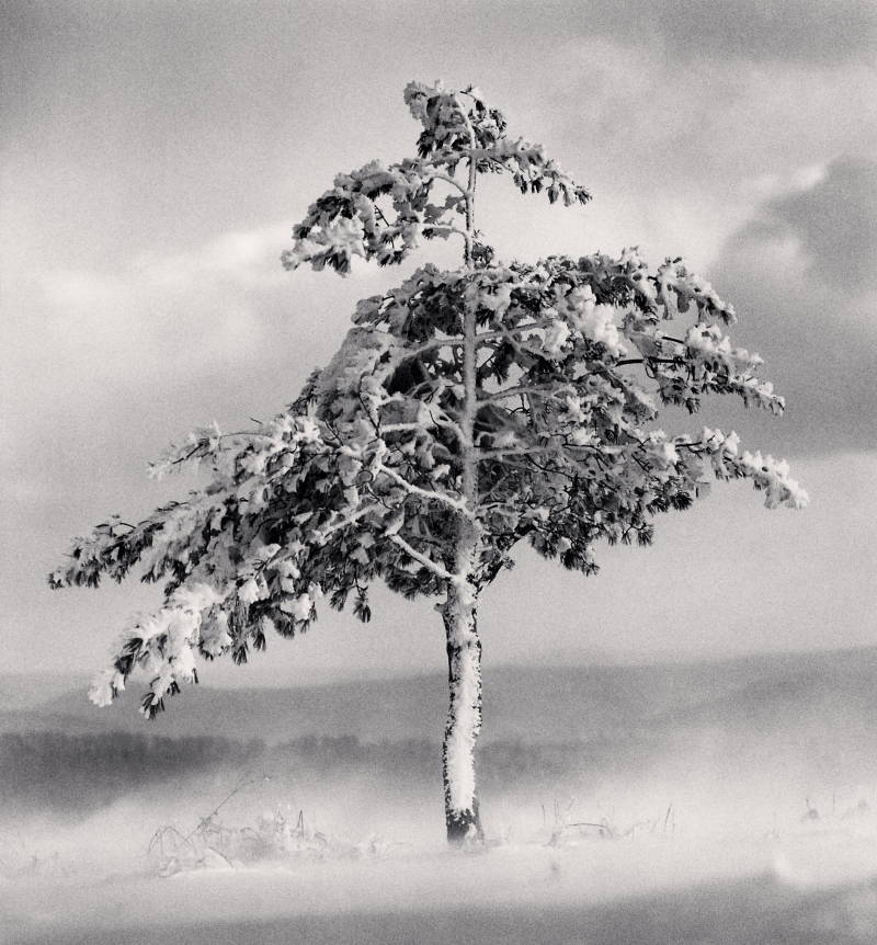 Tree in Snowdrift, Yangcao Hill, Wuchang, Heilongjiang, China. 2