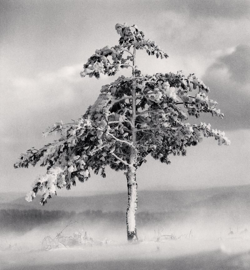 Tree in Snowdrift, Yangcao Hill, Wuchang, Heilongjiang, China. 2