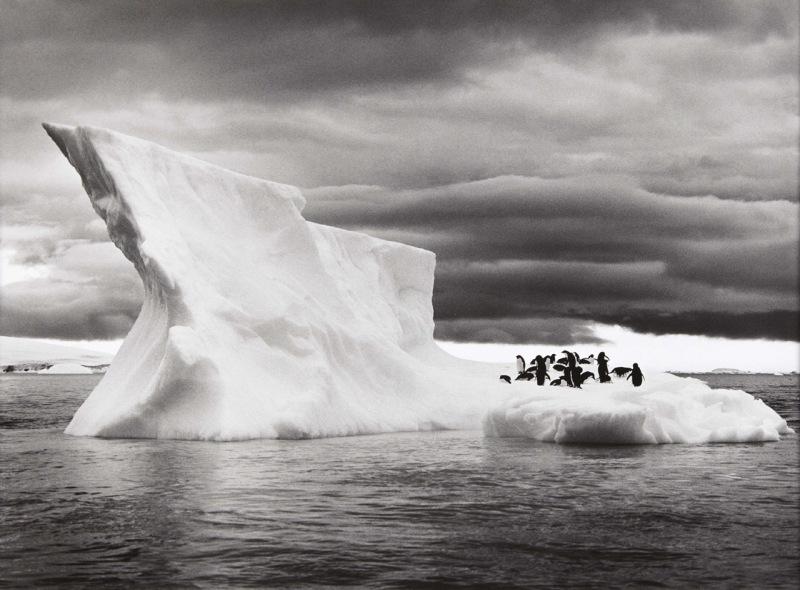 Icebergs near Paulet Island